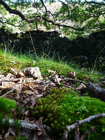 A photograph of mosses and trees in a Lancashire woodland.