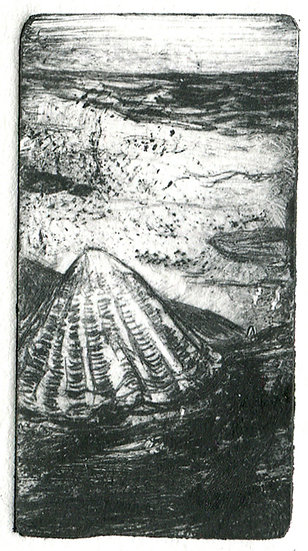 An illustration showing a limpet shell and a beach