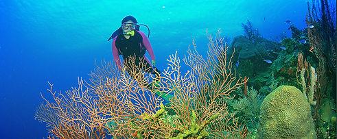 Marina Divers in Eilat