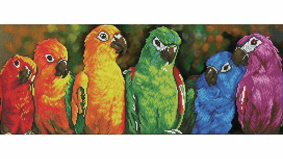 Diamond Dotz Rainbow Parrots