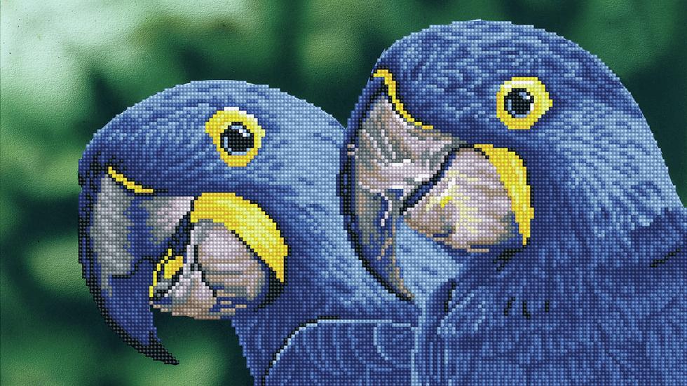 Diamond Dotz Blue Hyacinth `Macaws