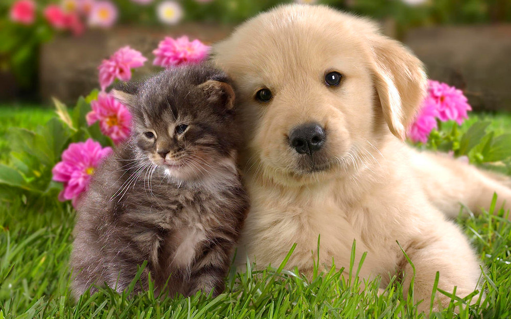 Cat Dog Pet Stress Remedy