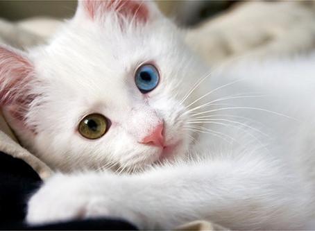 No more Scaredy Cat!!