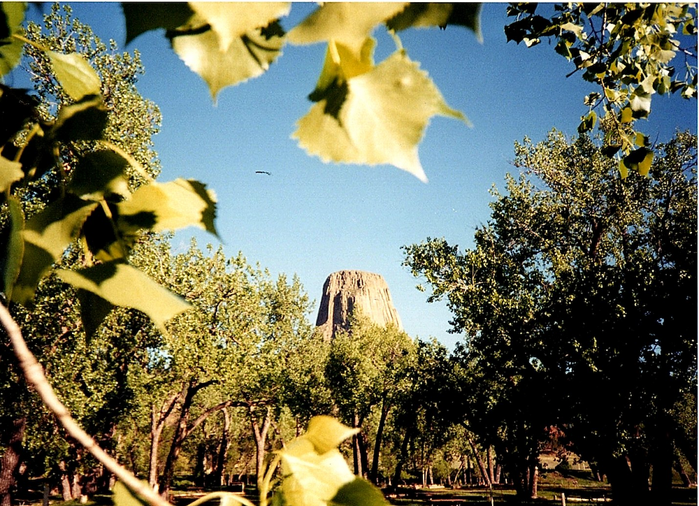 A Tower of Rock- Devil's Tower