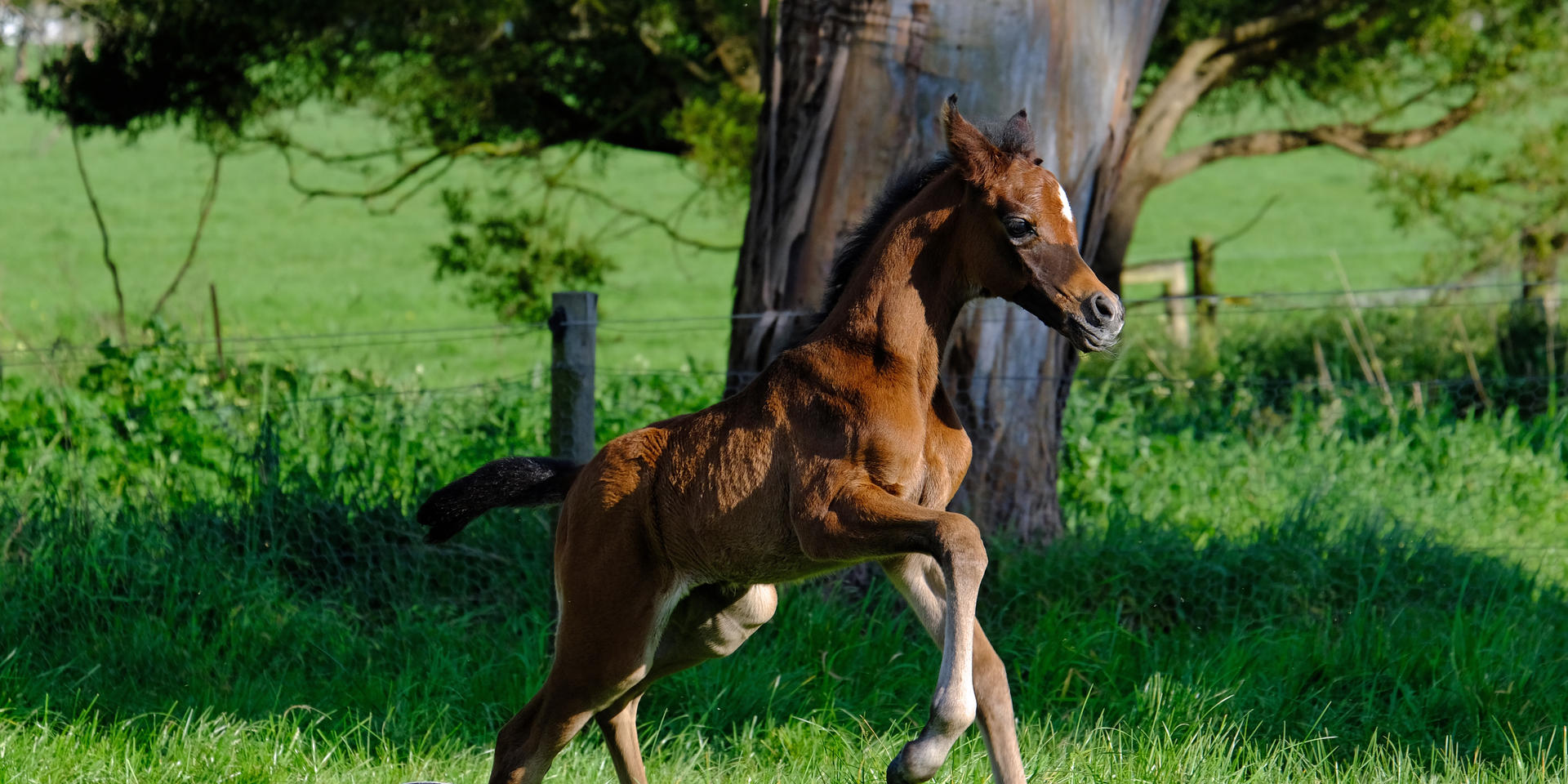 2020 filly 4 days old