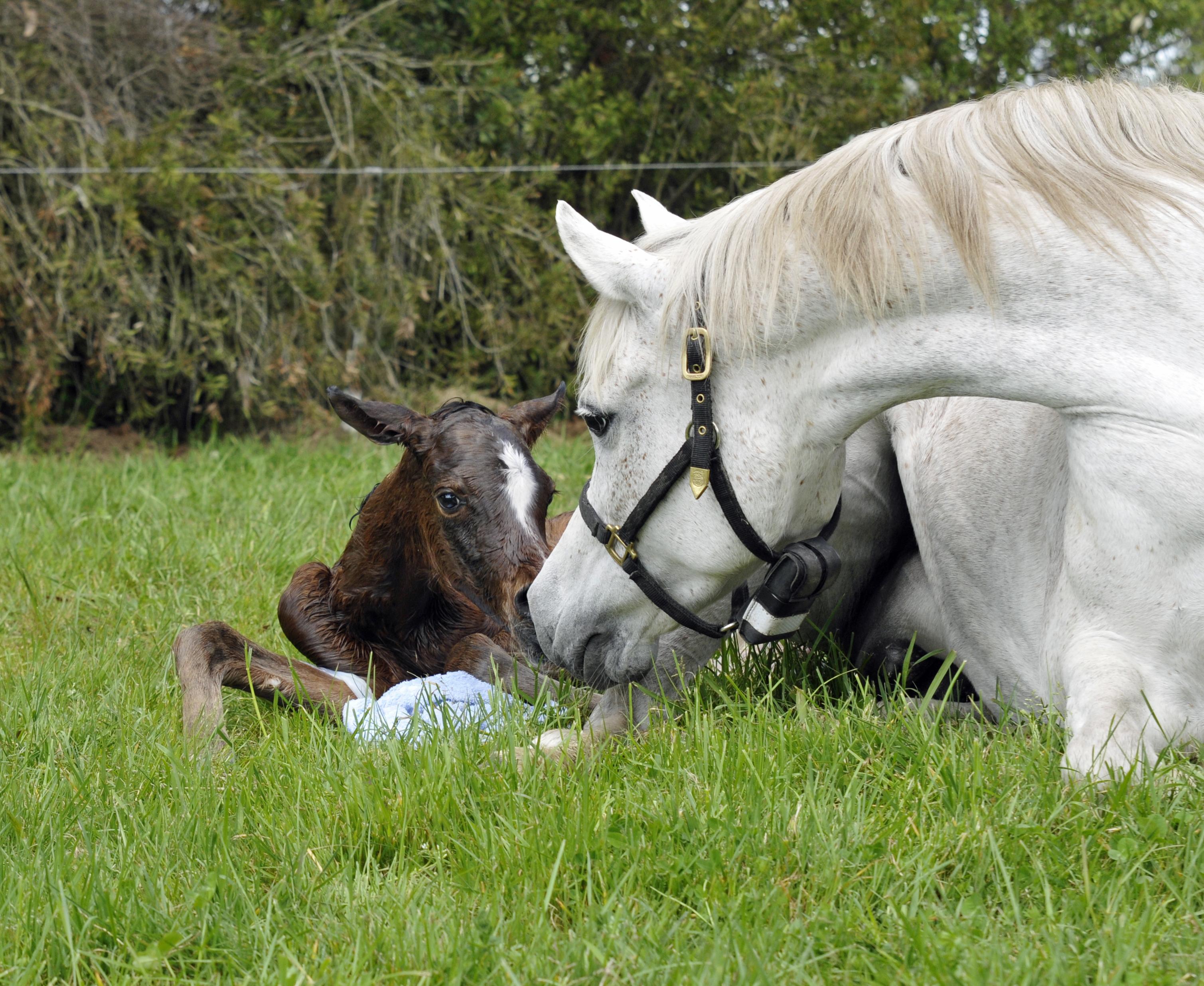 Voyager W newborn