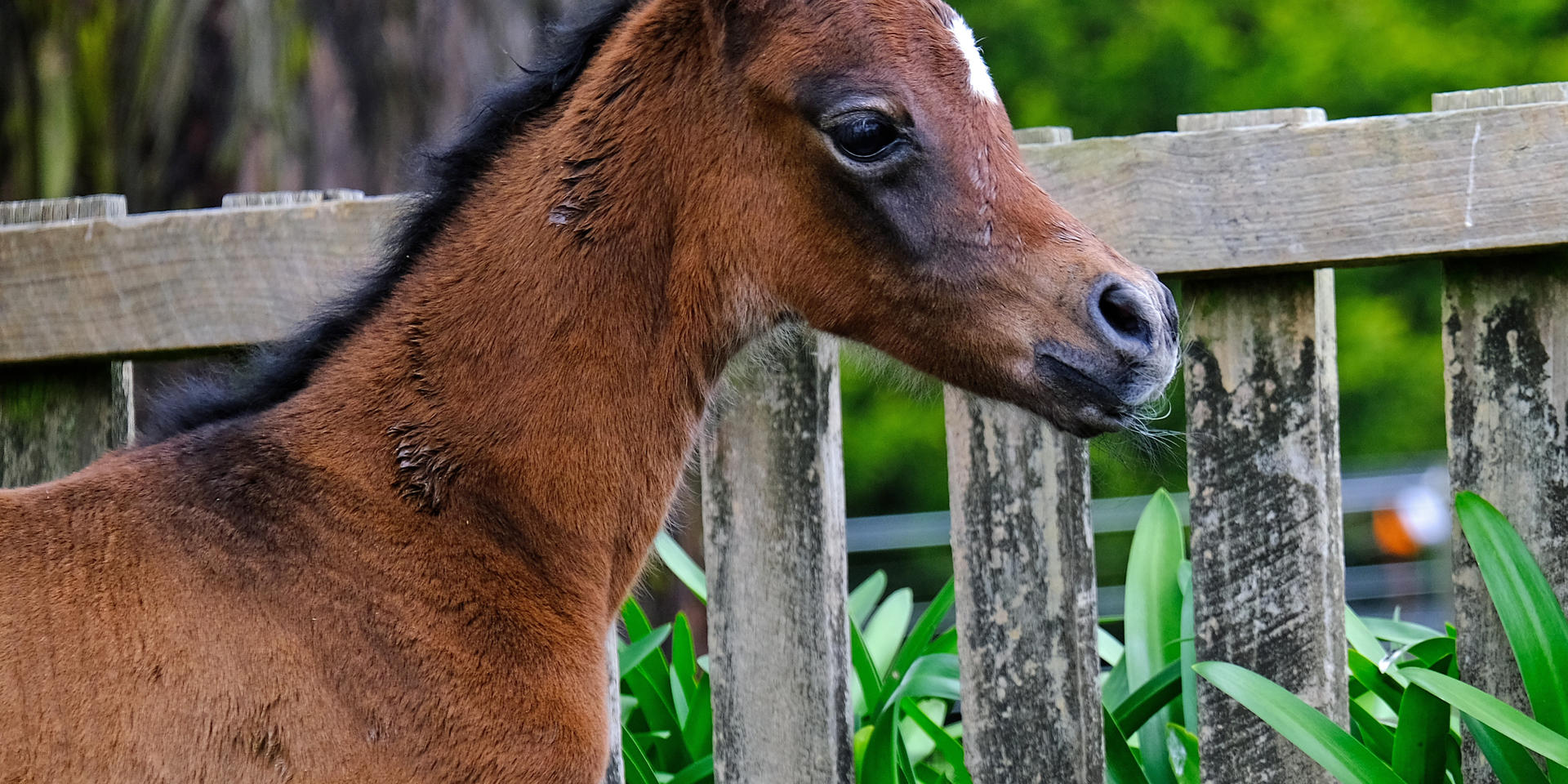 2020 Filly 12 hours old