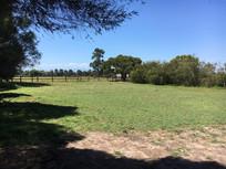 day yards