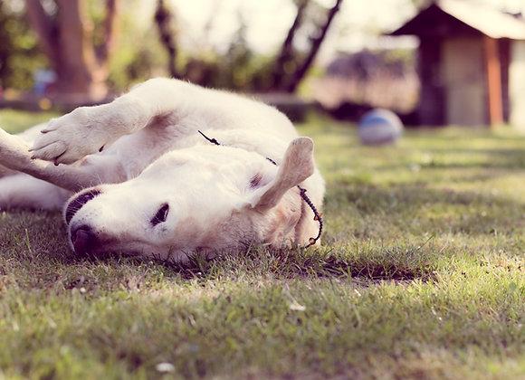 Hundebetreuung inkl. Übernachtung