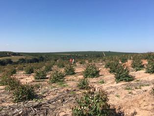 O perfil dos ingressantes de engenharia florestal mudou: seria preciso nos adaptarmos?