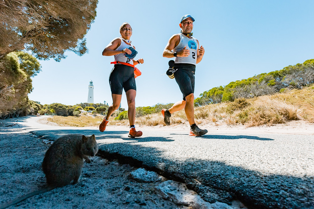Quokkas on the course in 2018 pic: Darren Hall