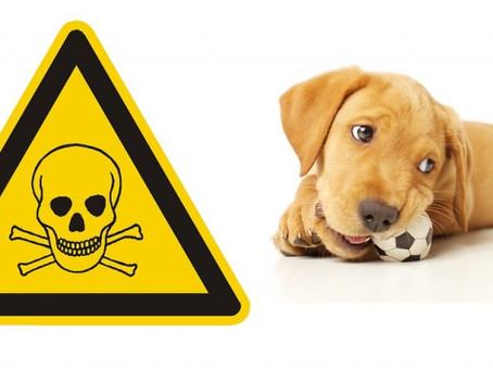 Le intossicazioni veterinarie