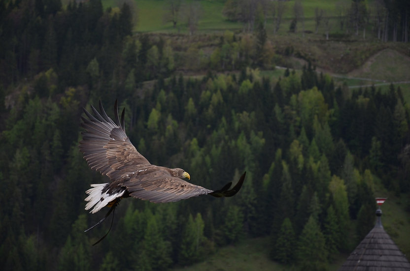 PrintPhotos Adler 01