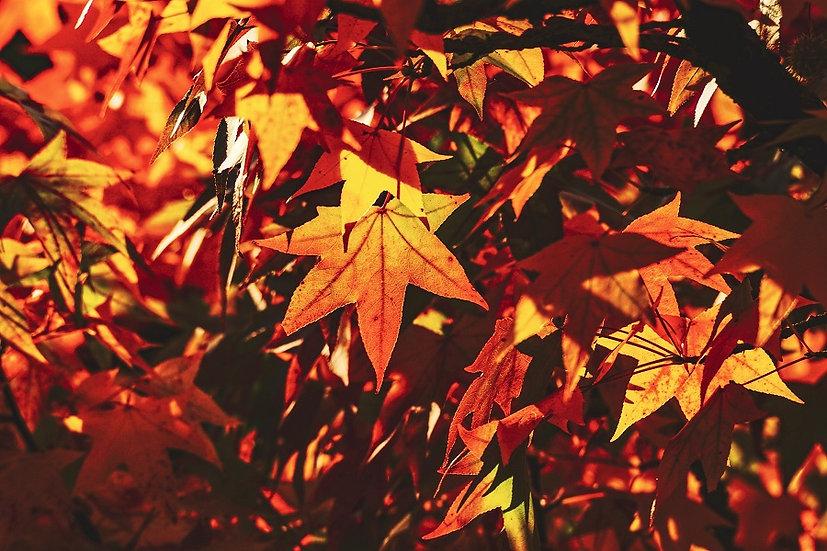 PrintPhotos Autumn 05