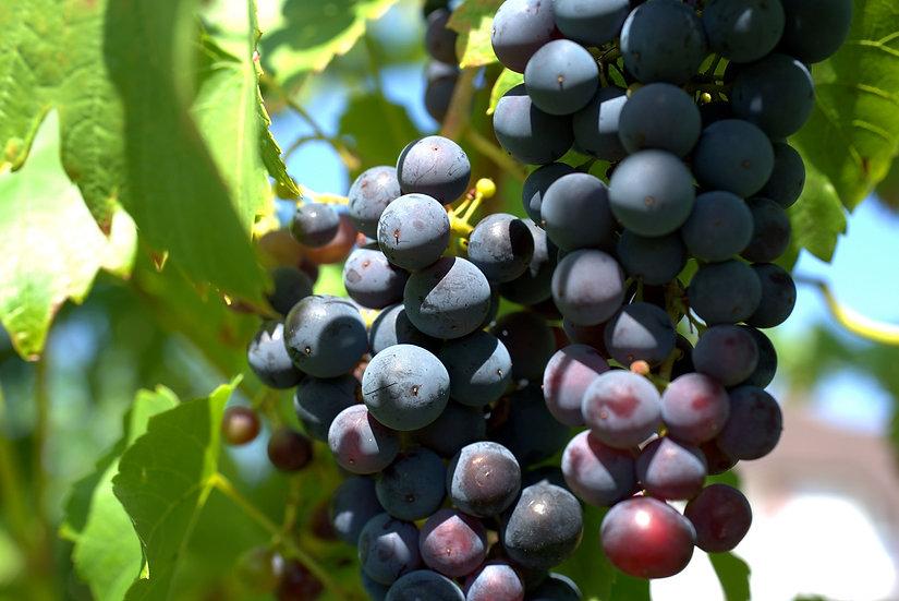 PrintPhotos Grapes 03