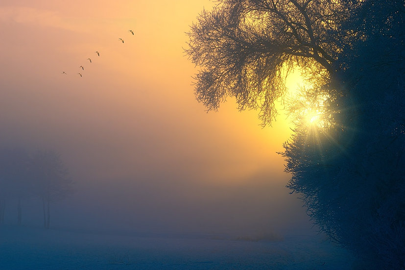 PrintPhotos Fog 01