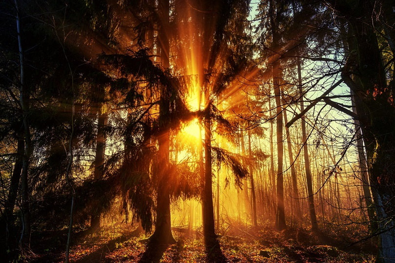 PrintPhotos Tree 07