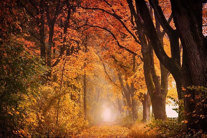 PrintPhotos Autumn 02