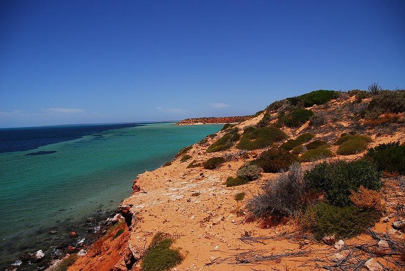 Shark Bay 06