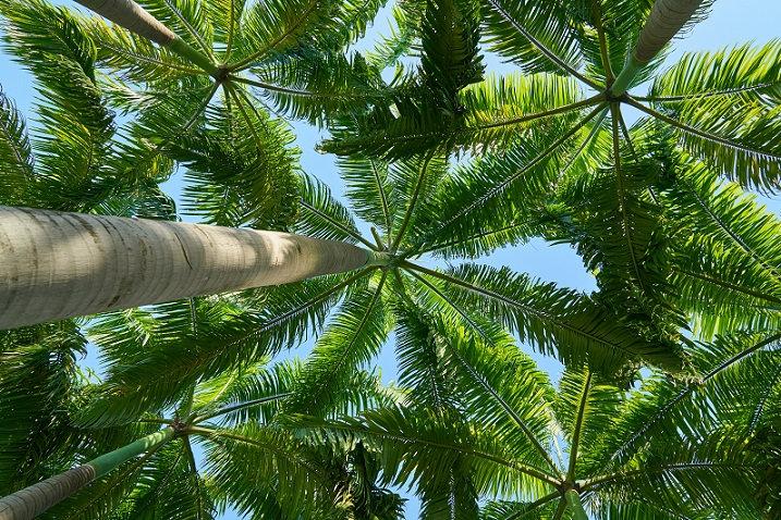 PrintPhotos Tree 10