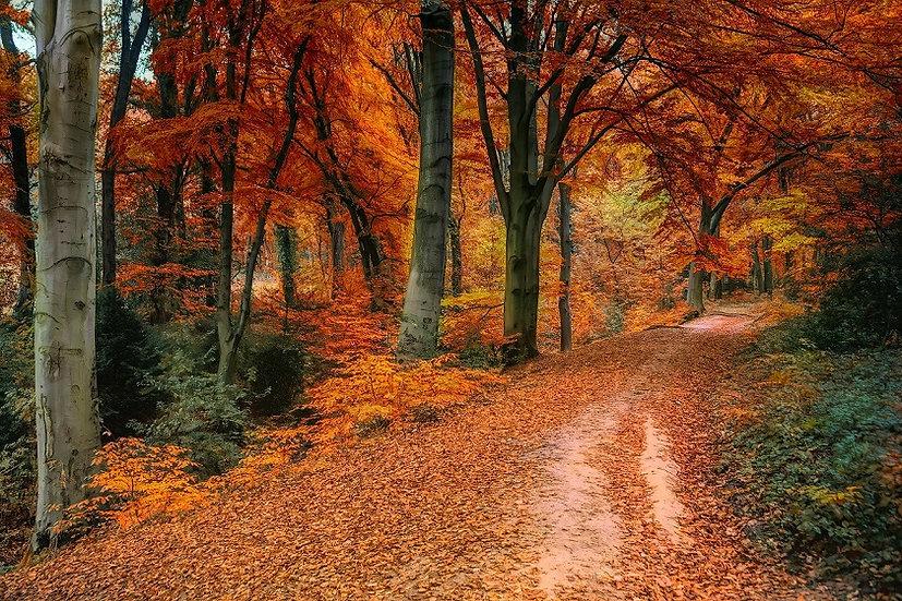 PrintPhotos Autumn 07