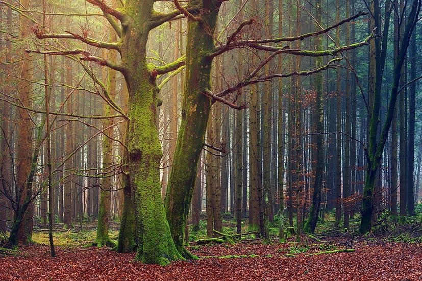 PrintPhotos Tree 01