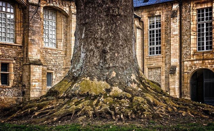 PrintPhotos Tree 02