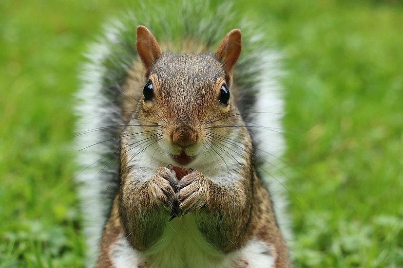 PrintPhotos Squirrel 01