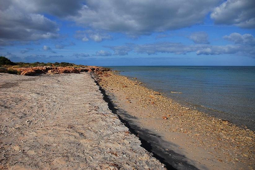 Shark Bay 07
