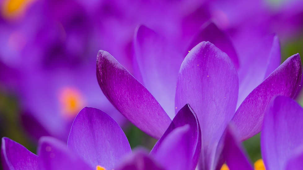 PrintPhotos Flowers 06
