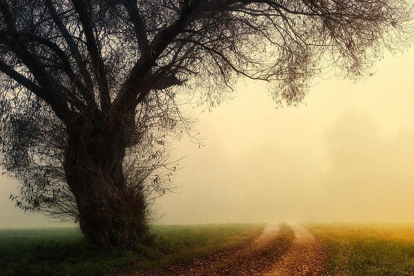 PrintPhotos Tree 05