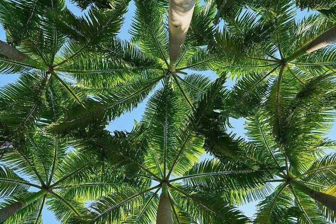 PrintPhotos Tree 09
