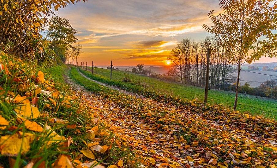 PrintPhotos Autumn 08
