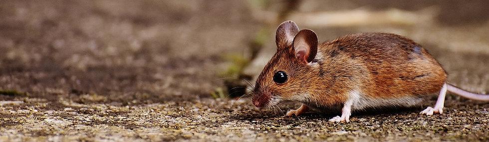 PrintPhotos Mouse 02