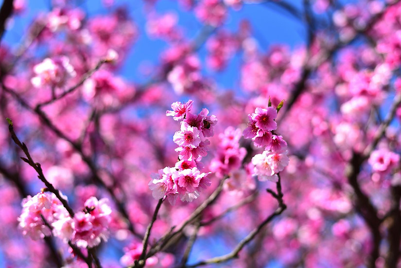 PrintPhotos Flowers 03
