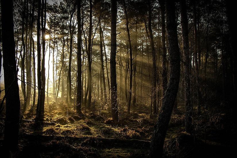 PrintPhotos Sunbeam 01
