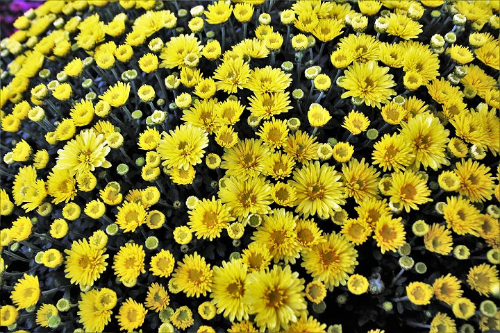 PrintPhotos Flowers 02