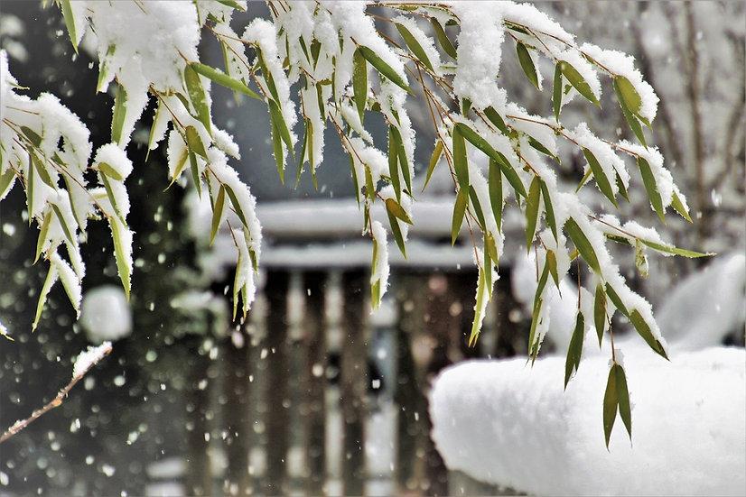 PrintPhotos Winter 02