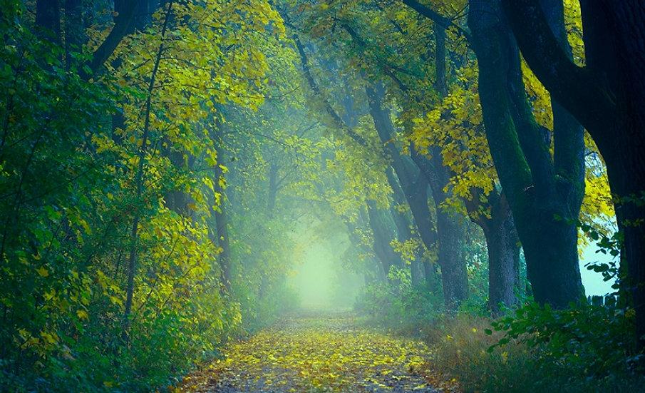 PrintPhotos Green Leaves 01
