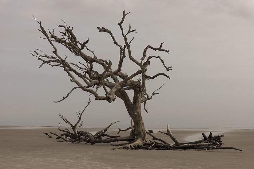 PrintPhotos Tree 06