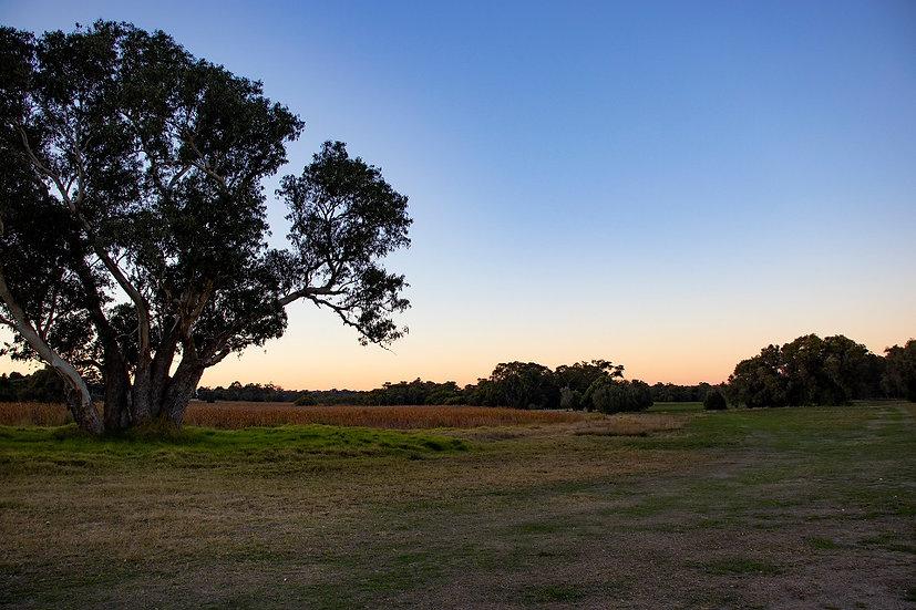 Yellagonga Regional Park - Western Australia 02