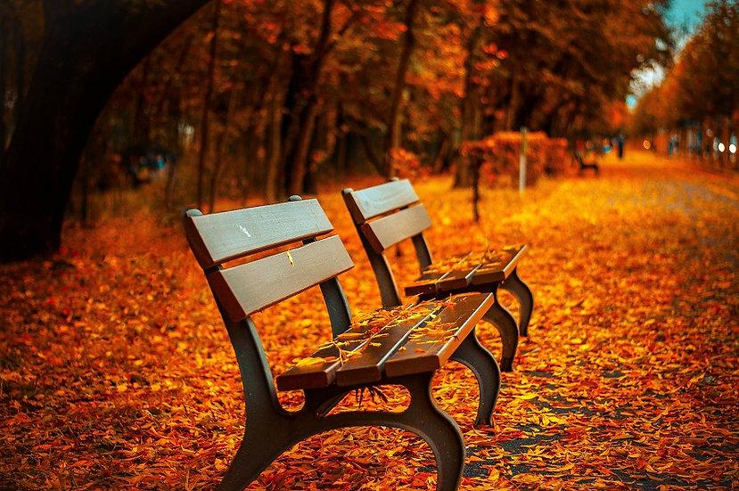 PrintPhotos Orange Leaves 01