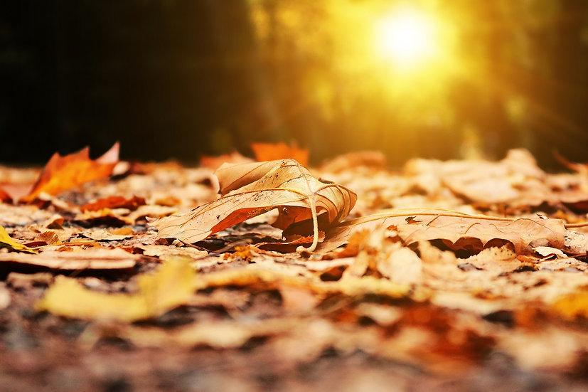 PrintPhotos Autumn 01