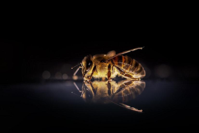 PrintPhotos Honey Bee 01