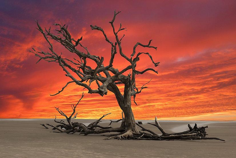 PrintPhotos Sunset 23