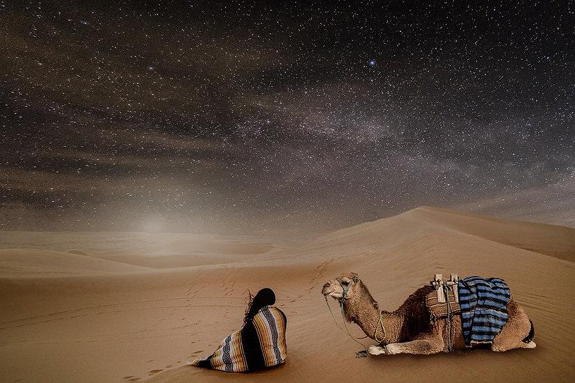 PrintPhotos Camel 01