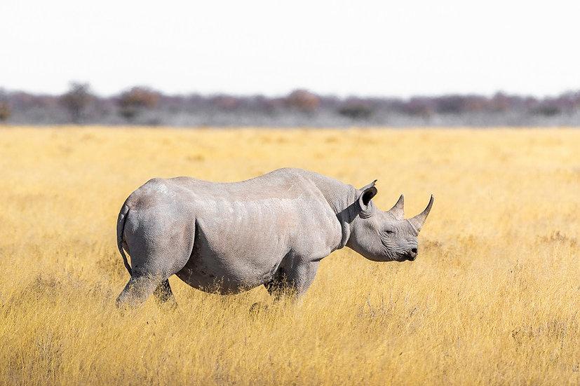 PrintPhotos Rhino 01