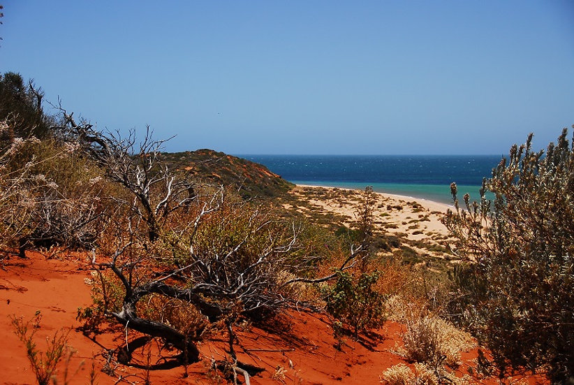 Shark Bay 03