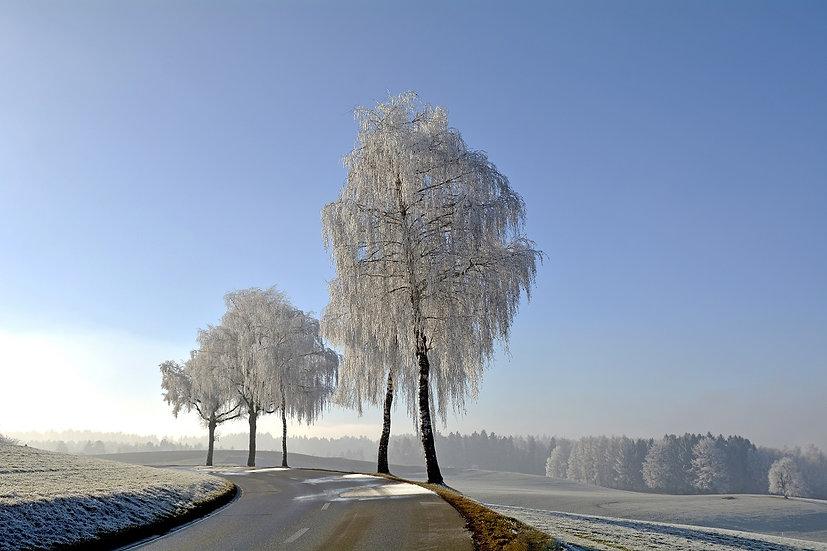 PrintPhotos Winter 03