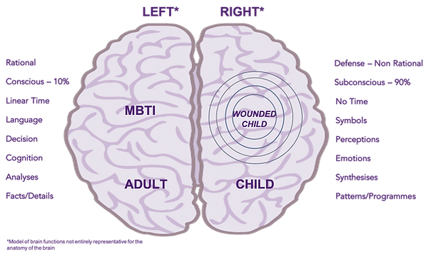 Brain left right.png